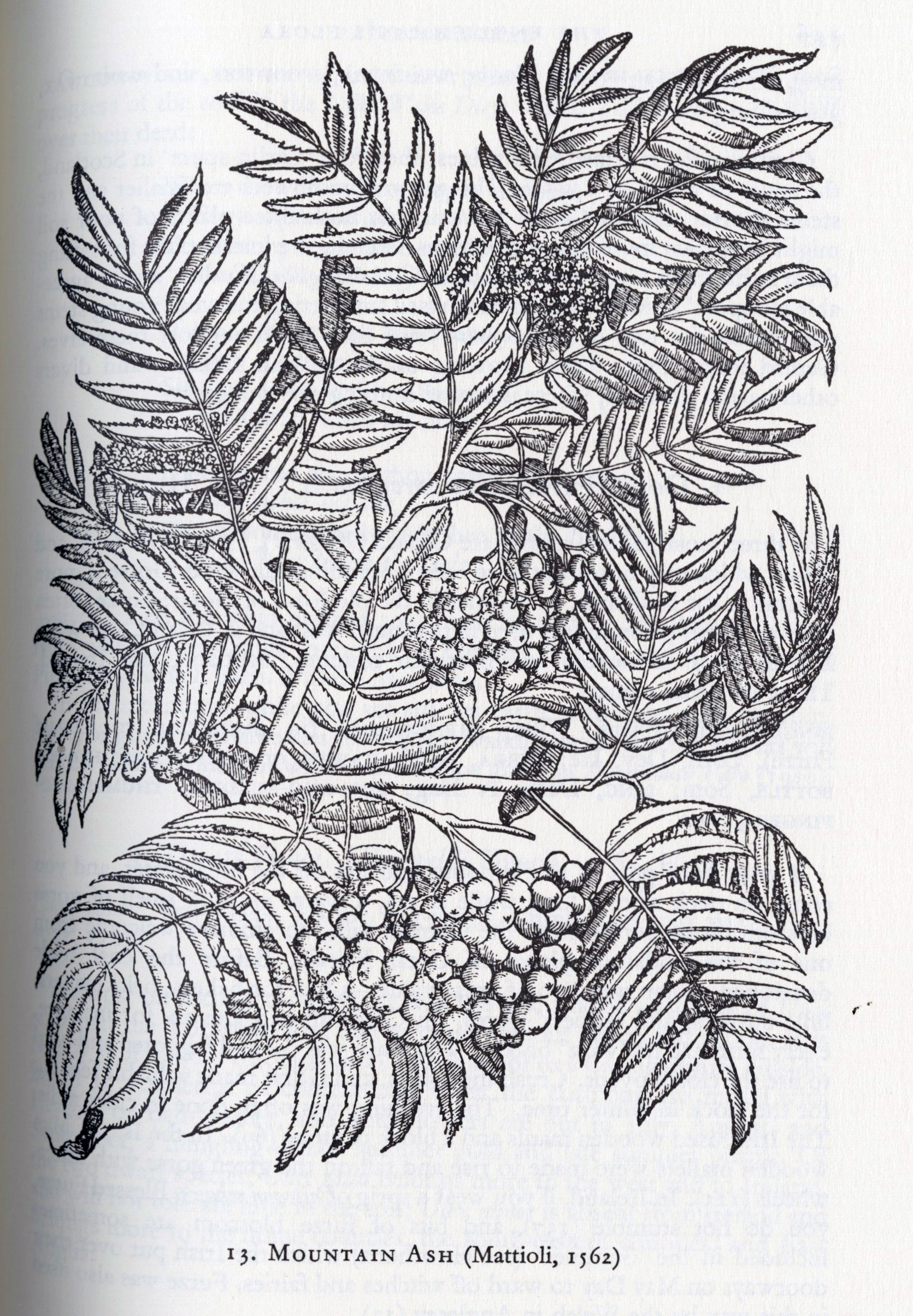 Englishman's Flora_pg 125