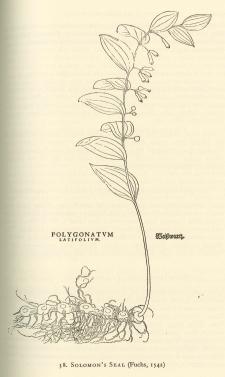 Englishman's Flora_pg 325 edited